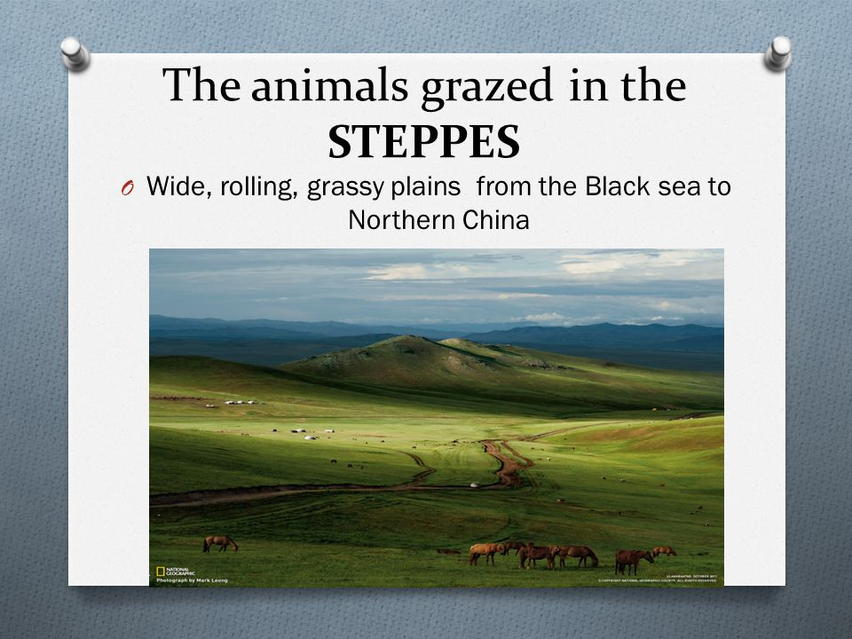 The animals grazed in the STEPPES