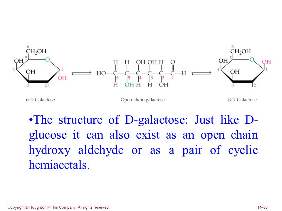 The structure of D-galactose: Just like D-glucose it can also exist as an open chain hydroxy aldehyde or as a pair of cyclic hemiacetals.