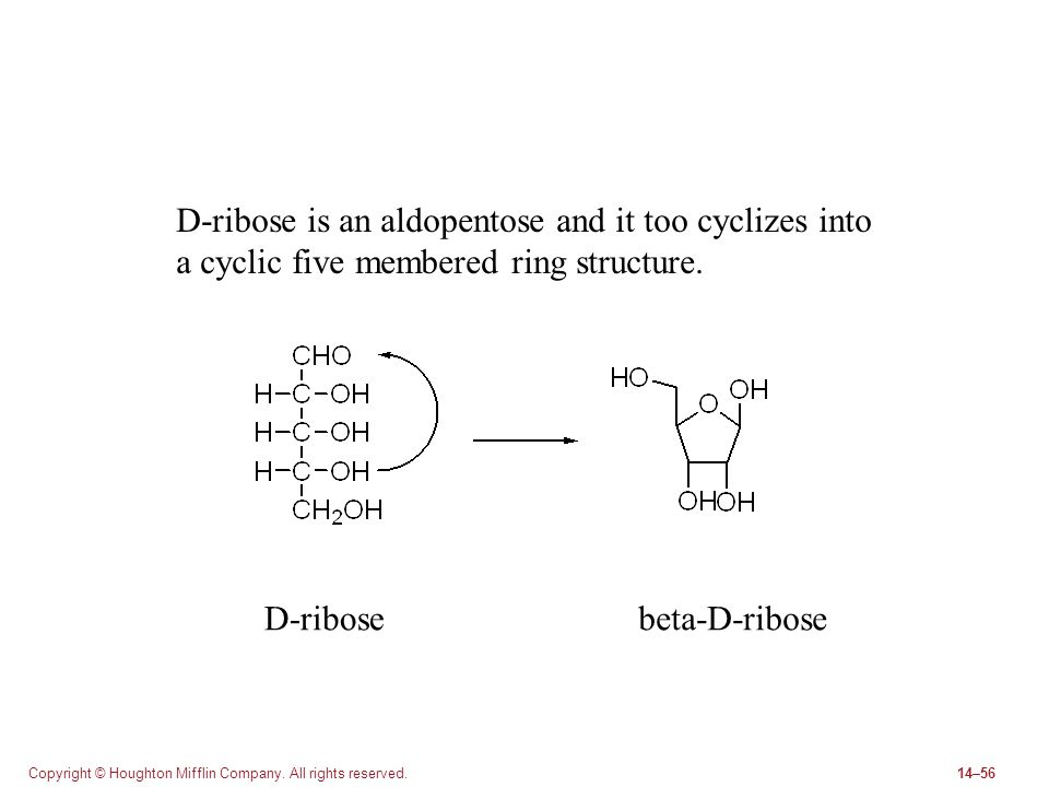 D-ribose is an aldopentose and it too cyclizes into