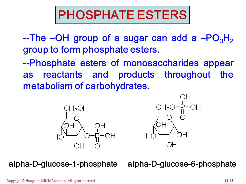 PHOSPHATE ESTERS --The –OH group of a sugar can add a –PO3H2 group to form phosphate esters.