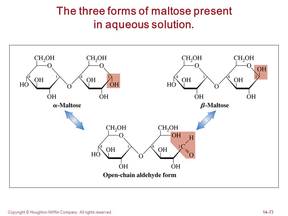 The three forms of maltose present in aqueous solution.