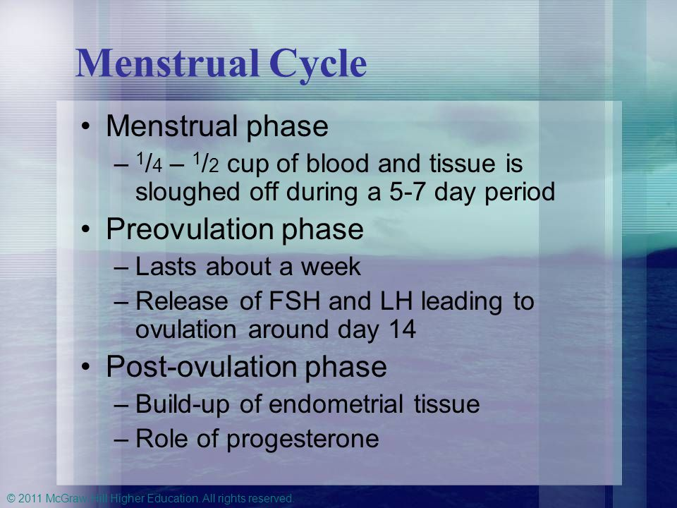 Menstrual Cycle Menstrual phase Preovulation phase