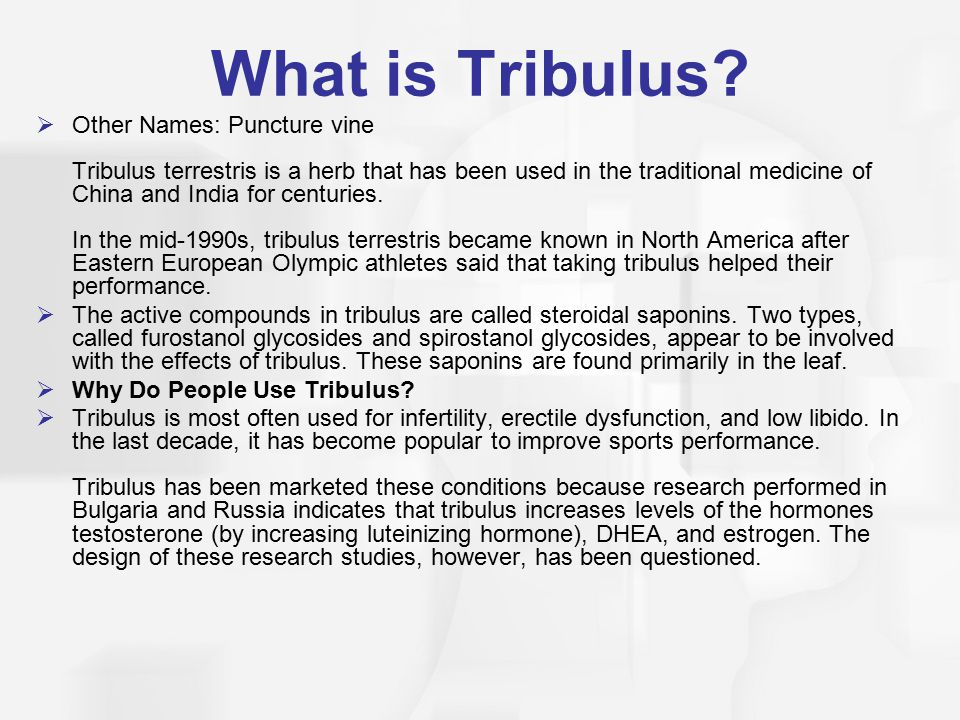 What is Tribulus