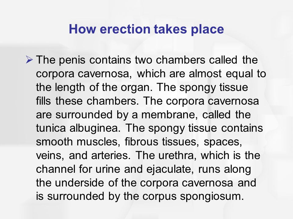 How erection takes place