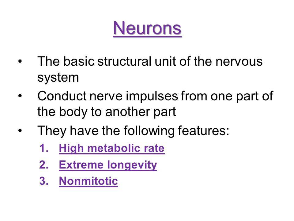 Neurons The basic structural unit of the nervous system