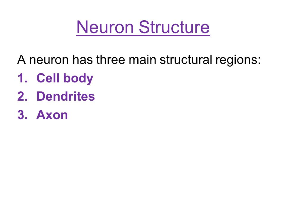 Neuron Structure A neuron has three main structural regions: Cell body