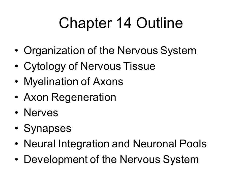 Chapter 14 Outline Organization of the Nervous System