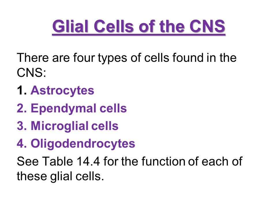 Glial Cells of the CNS There are four types of cells found in the CNS: