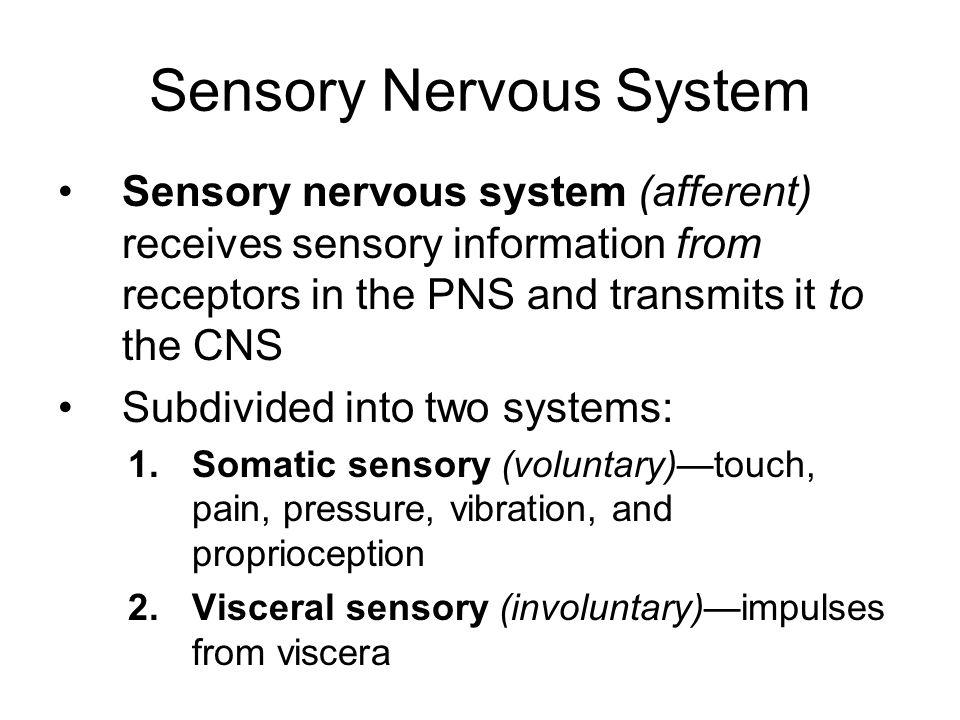 Sensory Nervous System