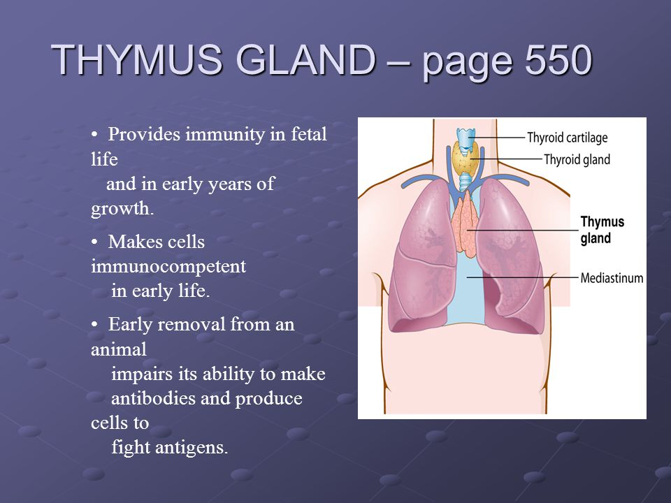 THYMUS GLAND – page 550 Provides immunity in fetal life