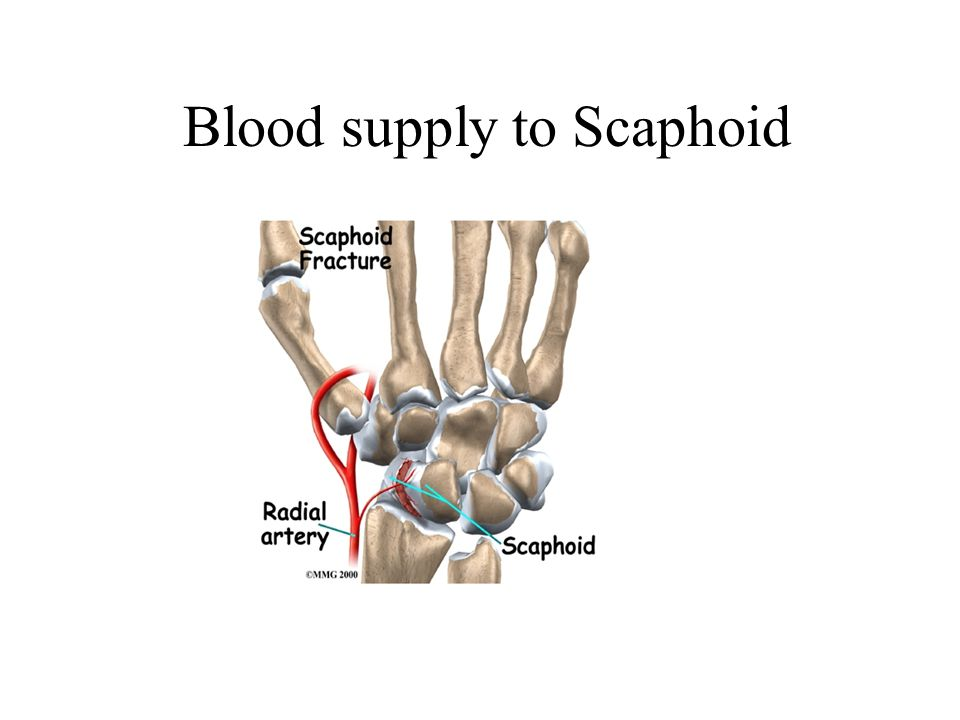 Blood supply to Scaphoid