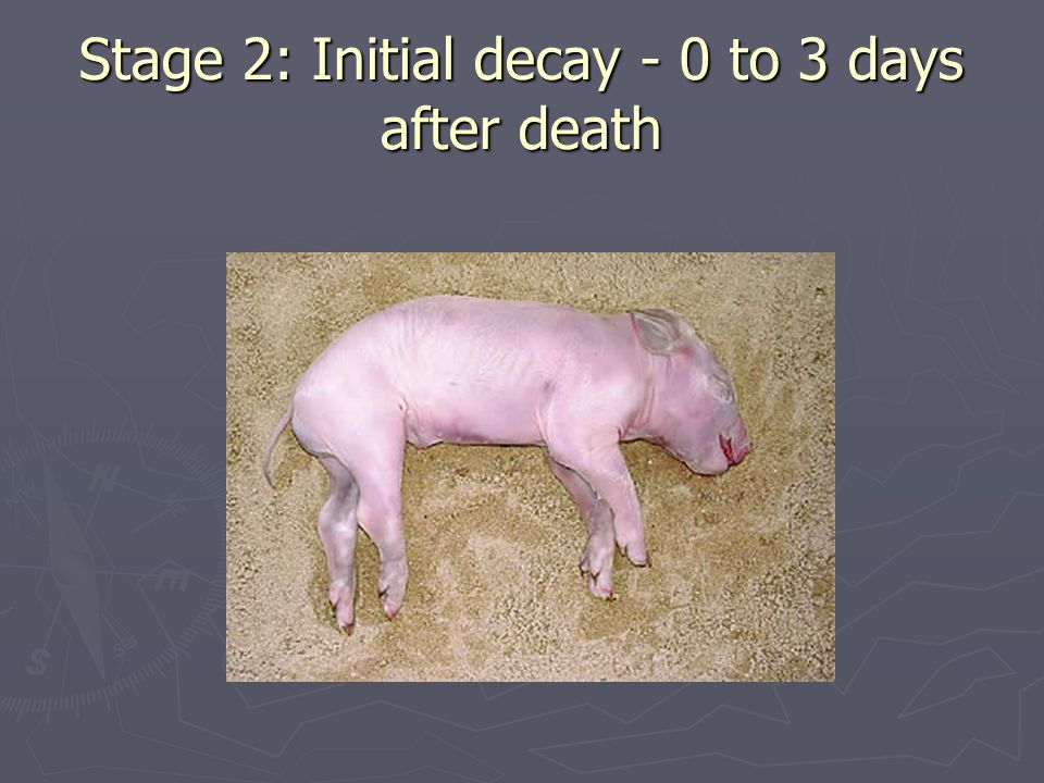 Stage 2: Initial decay - 0 to 3 days after death