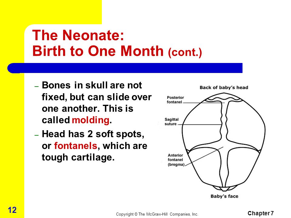 The Neonate: Birth to One Month (cont.)