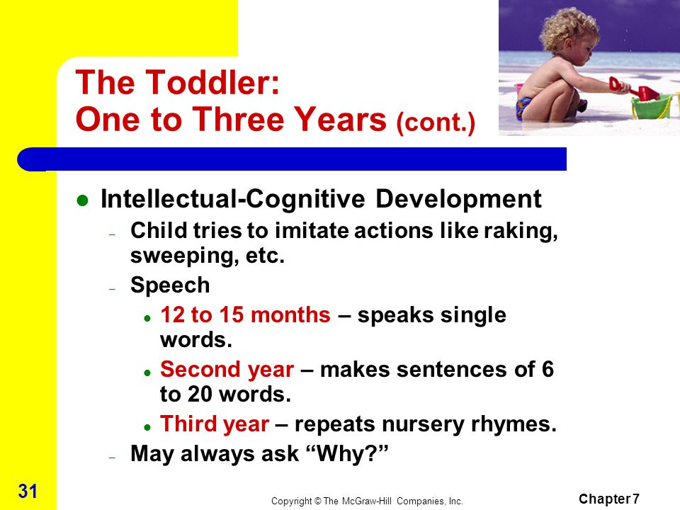 The Toddler: One to Three Years (cont.)