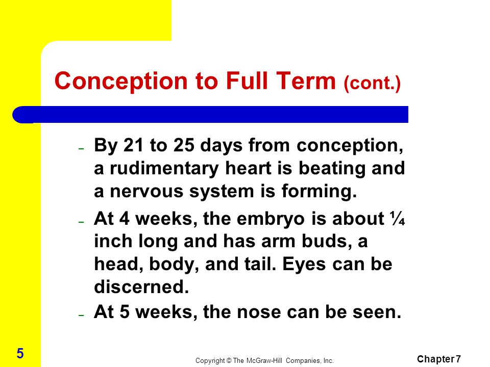 Conception to Full Term (cont.)
