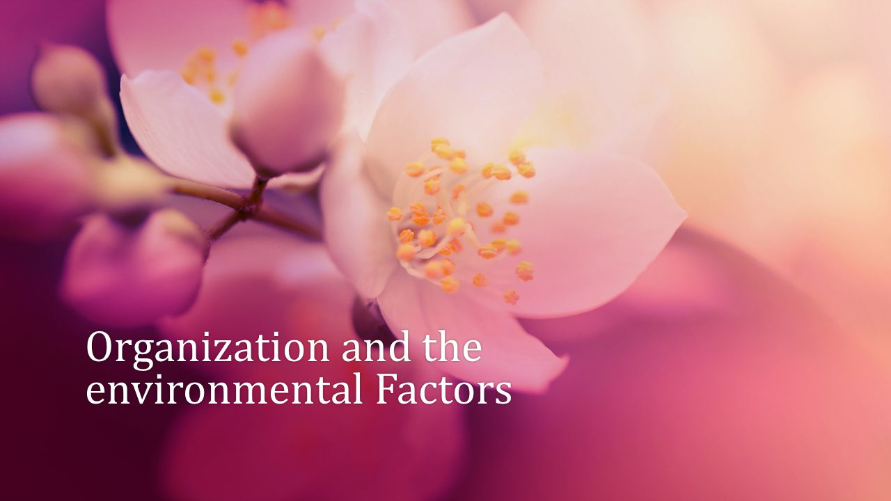 Organization and the environmental Factors