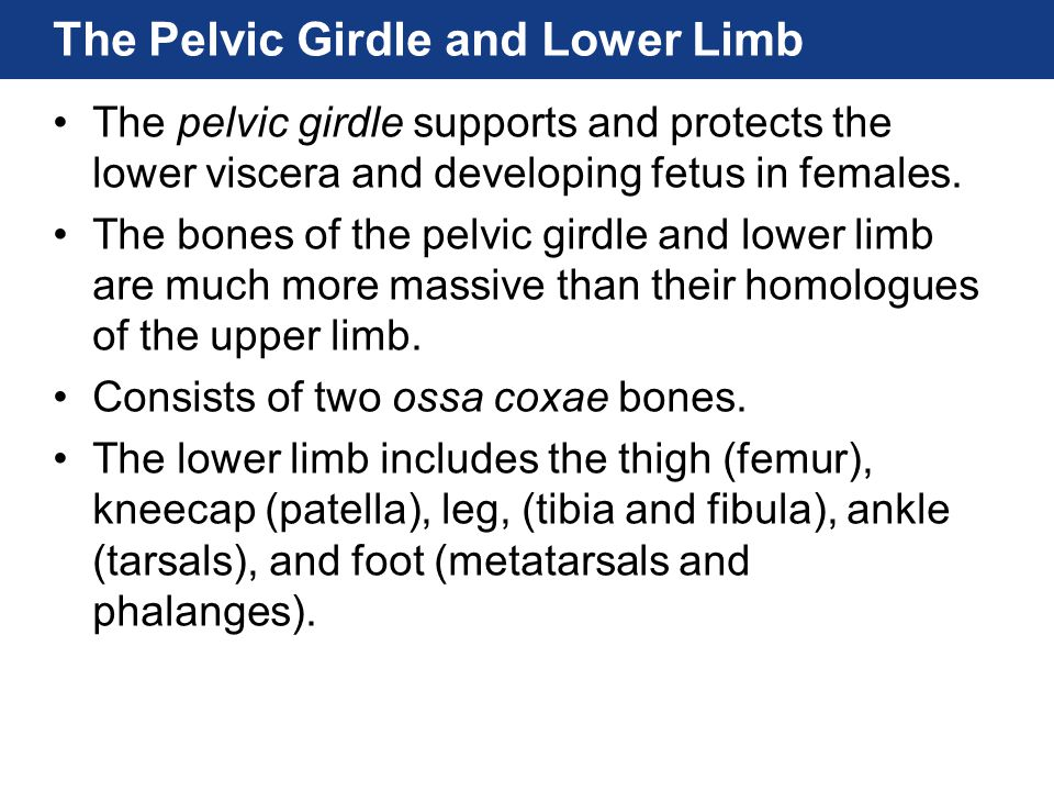 The Pelvic Girdle and Lower Limb