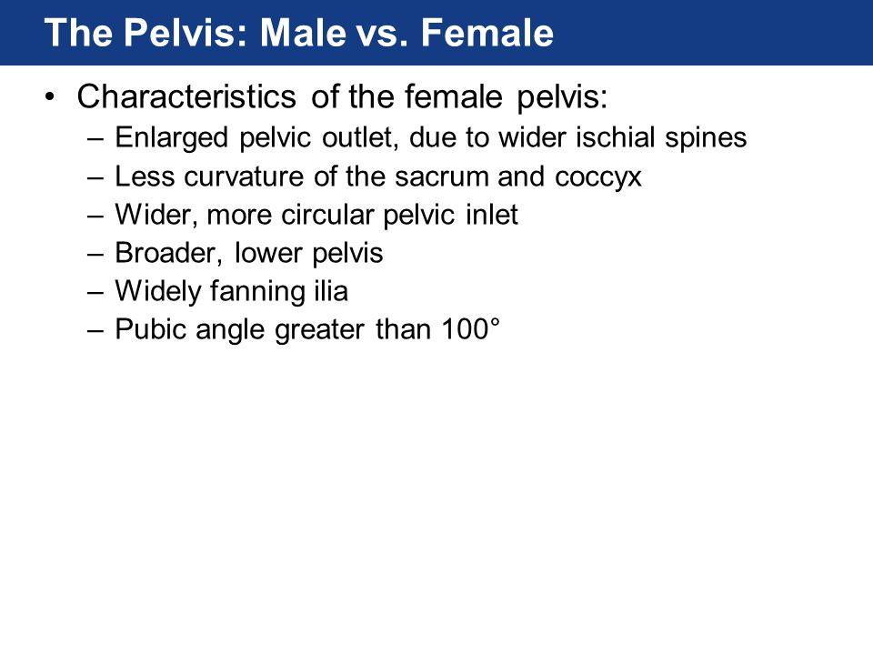 The Pelvis: Male vs. Female