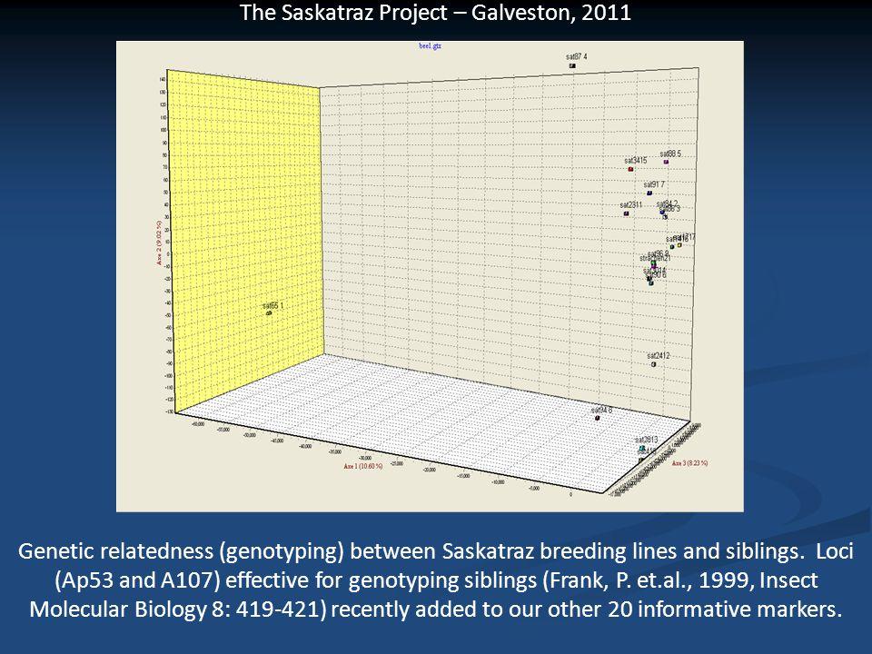 Genetic relatedness (genotyping) between Saskatraz breeding lines and siblings.