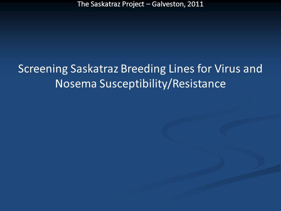 Screening Saskatraz Breeding Lines for Virus and Nosema Susceptibility/Resistance