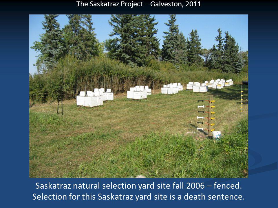 Saskatraz natural selection yard site fall 2006 – fenced