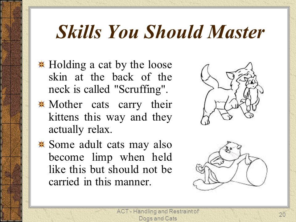 Skills You Should Master