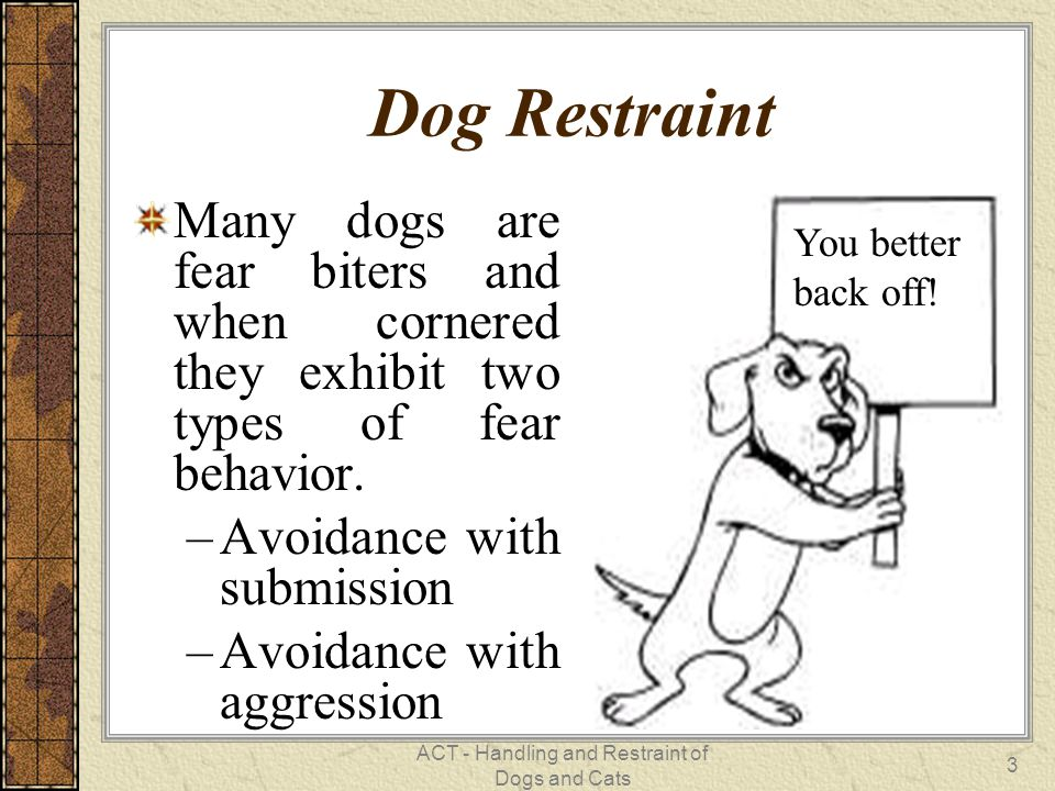 ACT - Handling and Restraint of Dogs and Cats