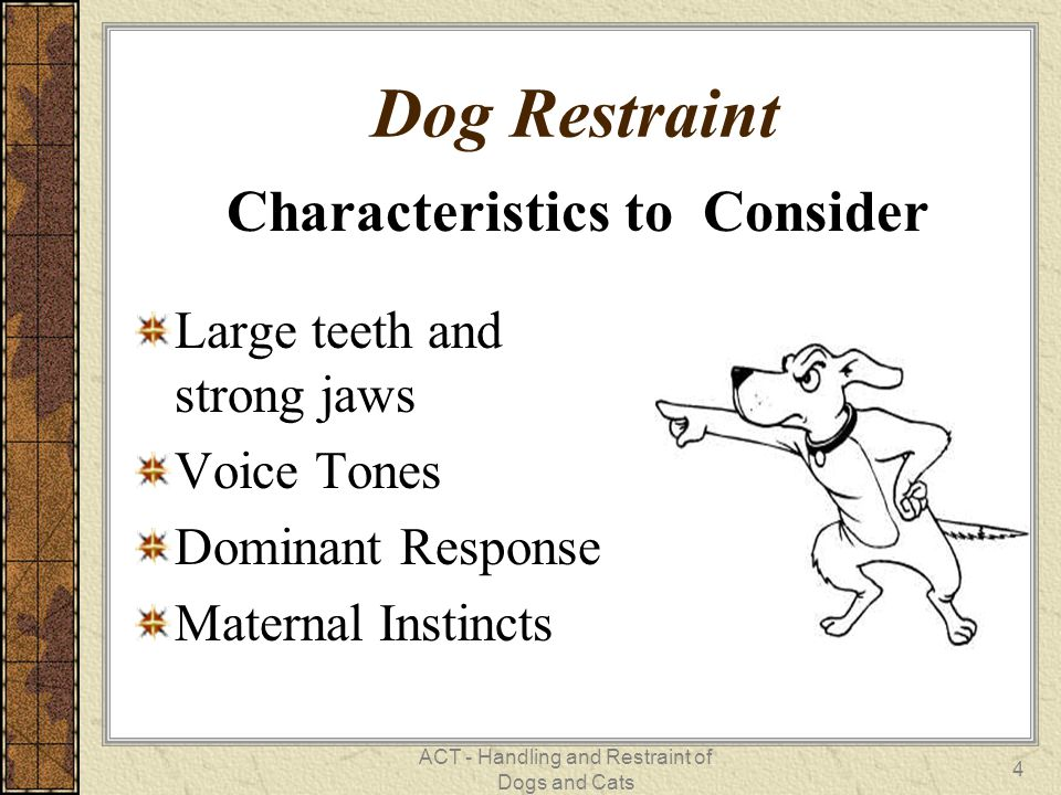 Characteristics to Consider