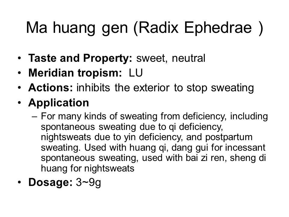 Ma huang gen (Radix Ephedrae )