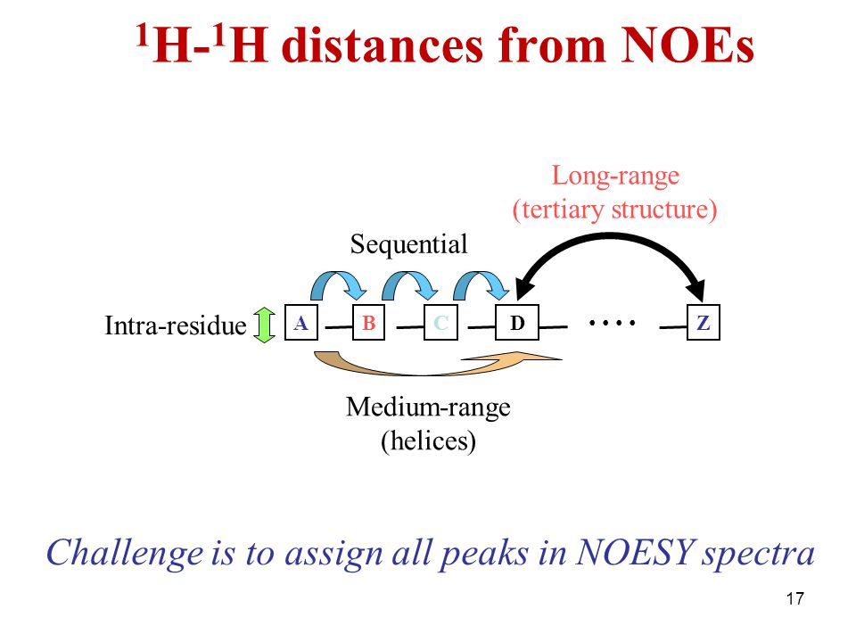 1H-1H distances from NOEs