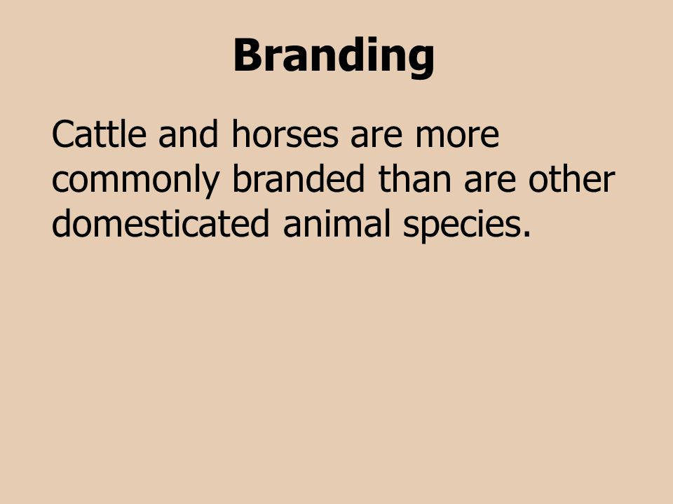 Branding Cattle and horses are more commonly branded than are other domesticated animal species.