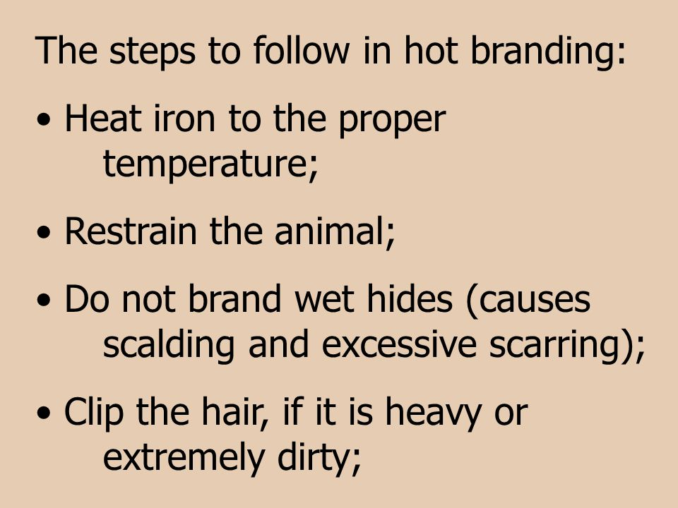 The steps to follow in hot branding: