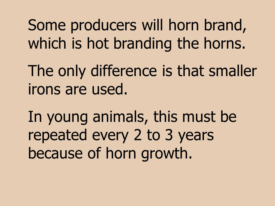 Some producers will horn brand, which is hot branding the horns.
