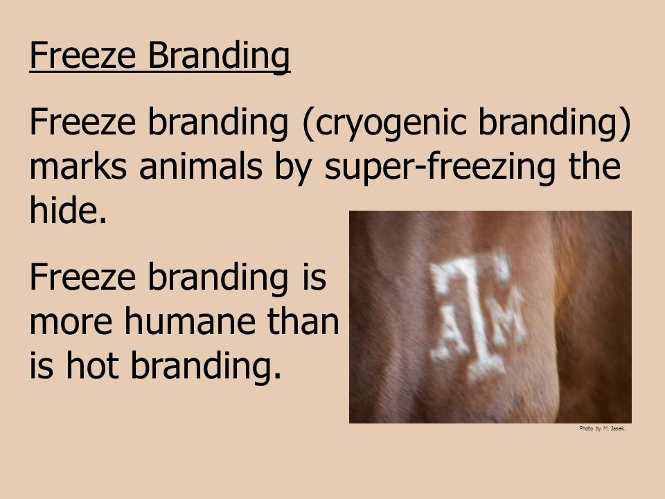 Freeze branding is more humane than is hot branding.