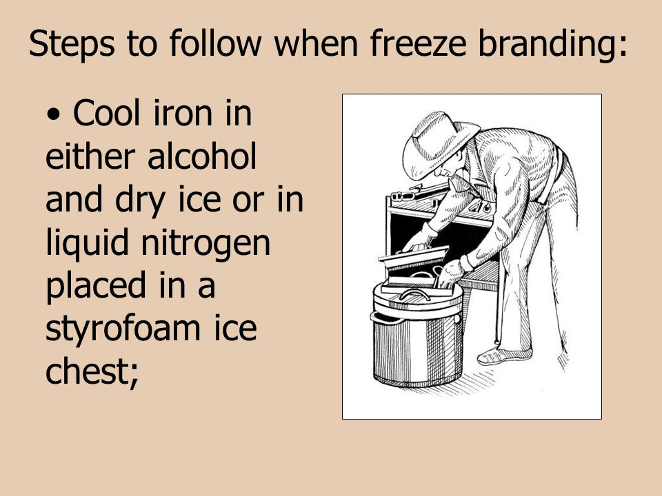 Steps to follow when freeze branding: