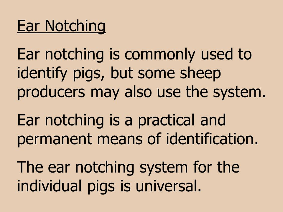 Ear Notching Ear notching is commonly used to identify pigs, but some sheep producers may also use the system.