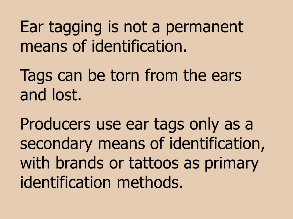 Ear tagging is not a permanent means of identification.
