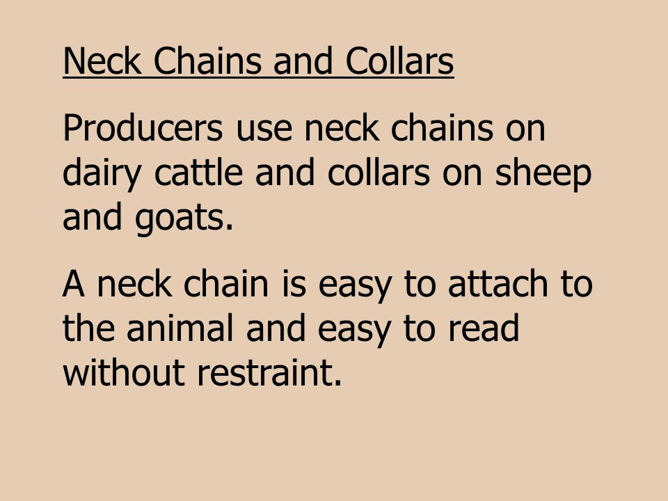 Neck Chains and Collars
