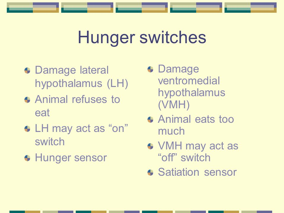 Hunger switches Damage lateral hypothalamus (LH) Animal refuses to eat