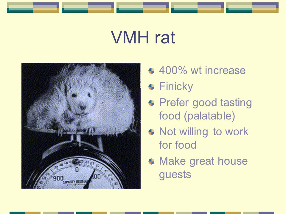 VMH rat 400% wt increase Finicky Prefer good tasting food (palatable)
