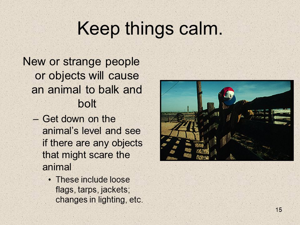 New or strange people or objects will cause an animal to balk and bolt
