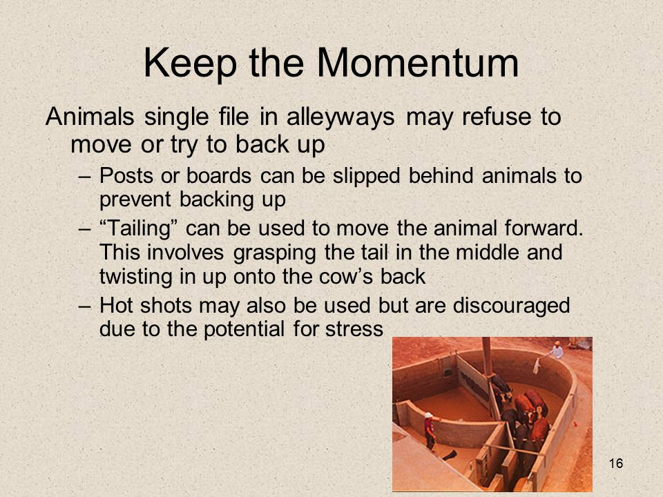 Keep the Momentum Animals single file in alleyways may refuse to move or try to back up.