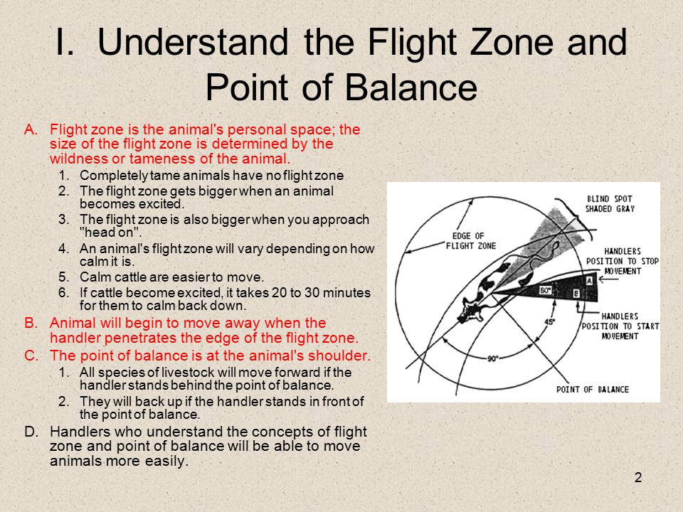I. Understand the Flight Zone and Point of Balance