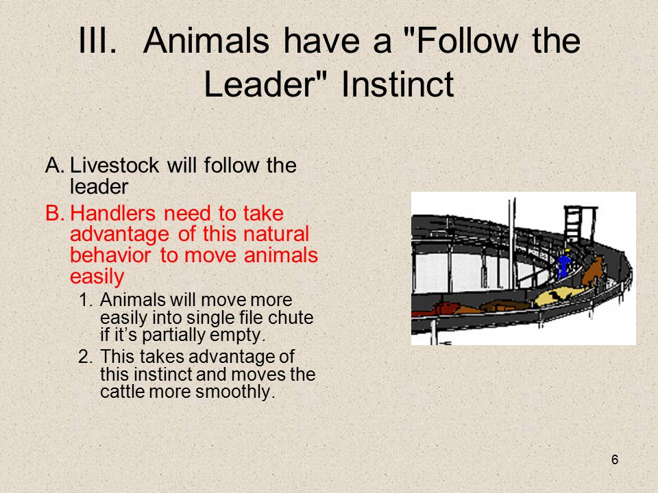 III. Animals have a Follow the Leader Instinct