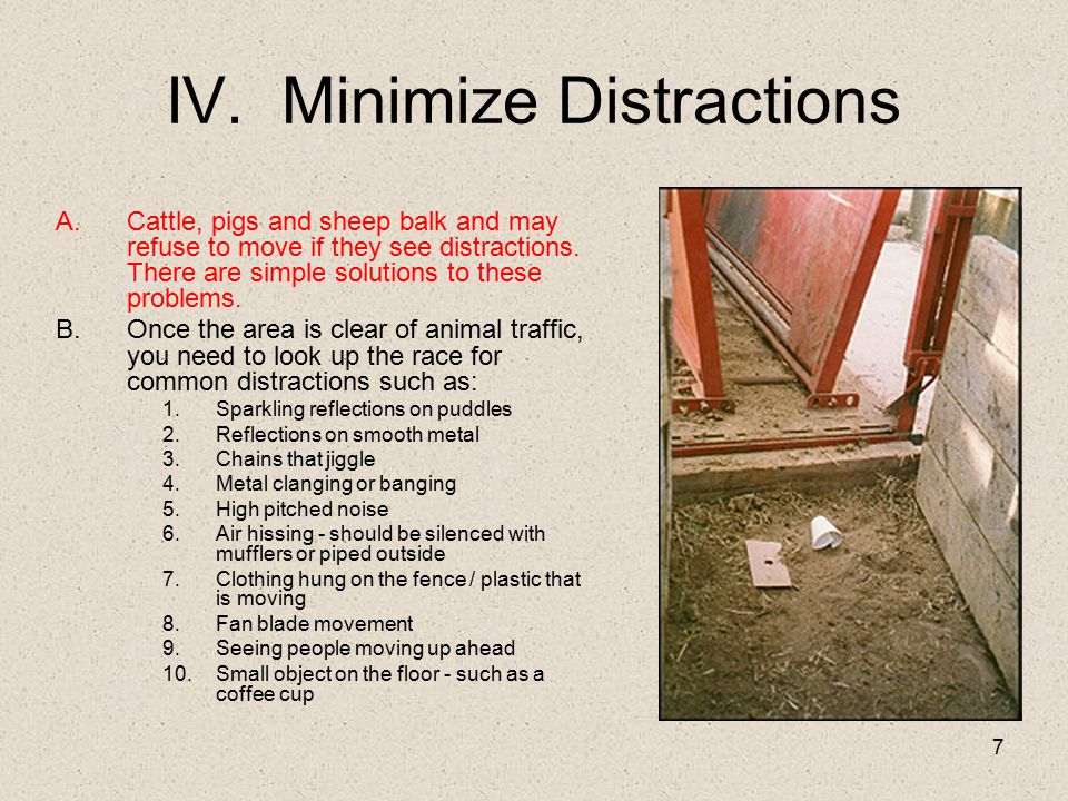 IV. Minimize Distractions