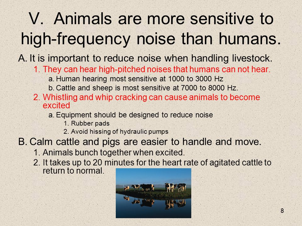 V. Animals are more sensitive to high-frequency noise than humans.