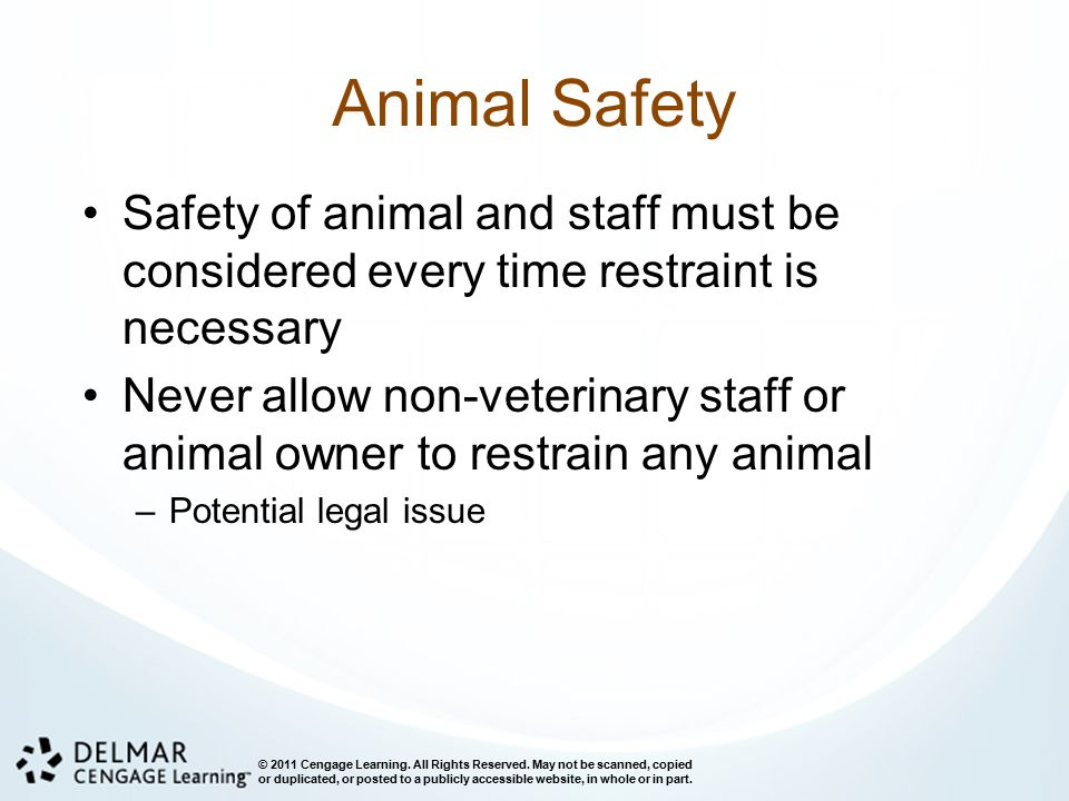 Animal Safety Safety of animal and staff must be considered every time restraint is necessary.