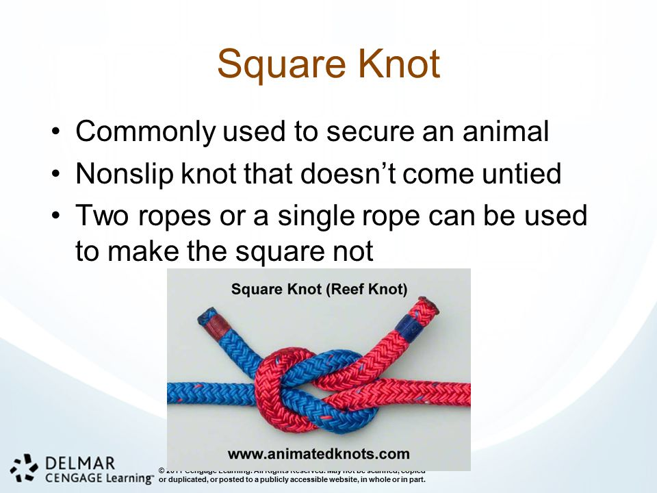 Square Knot Commonly used to secure an animal