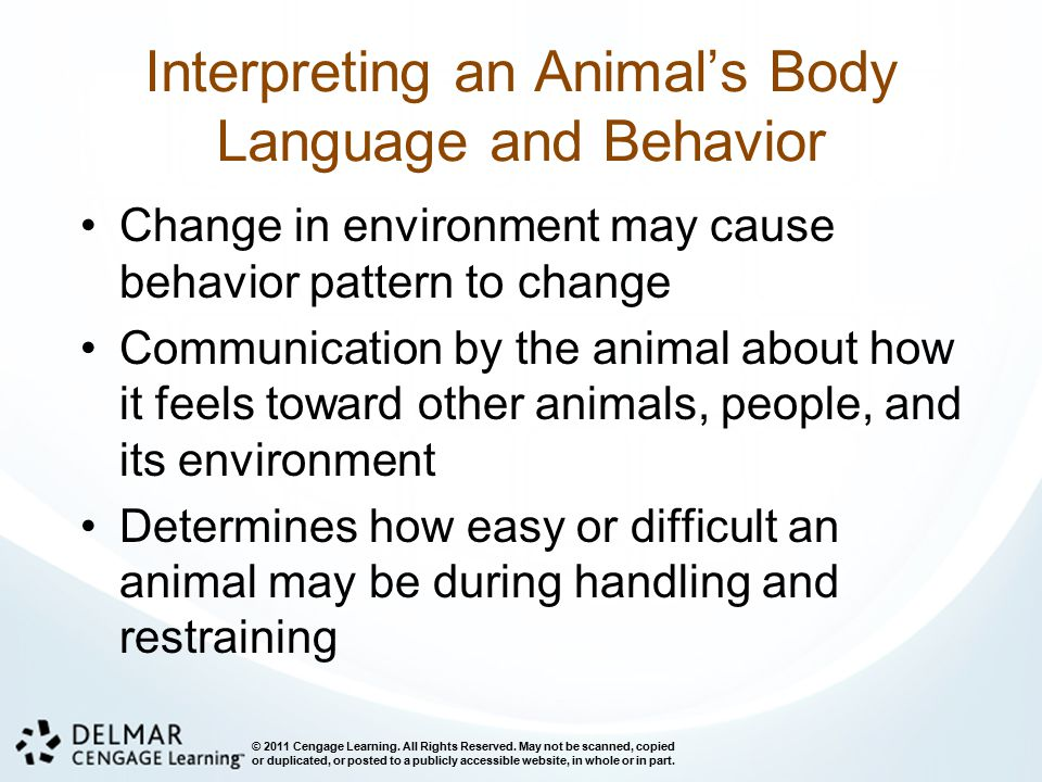 Interpreting an Animal's Body Language and Behavior