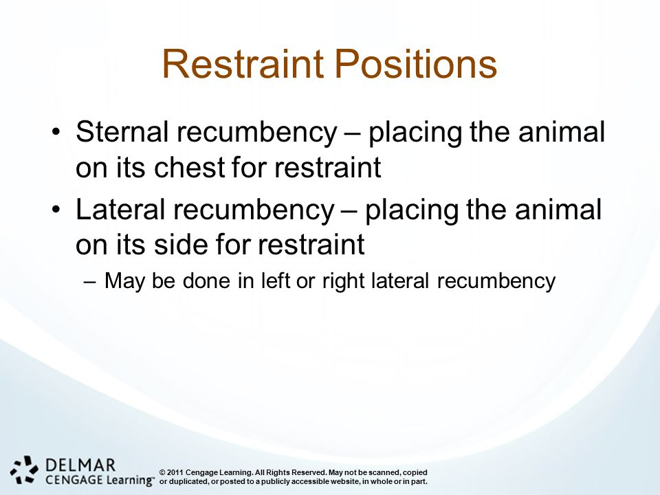 Restraint Positions Sternal recumbency – placing the animal on its chest for restraint.